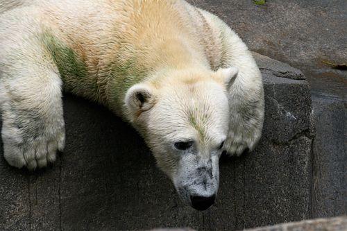 Zoo pb2