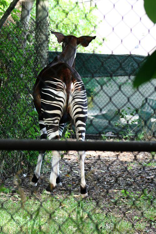 Zoo okp1