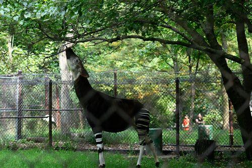 Zoo okp2