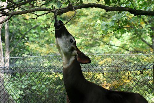 Zoo okp4