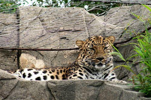 Zoo leo1