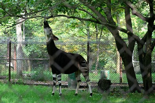 Zoo okp5