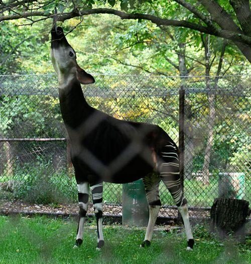 Zoo okp6