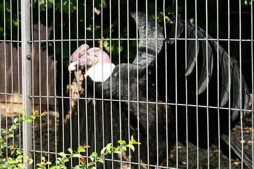 Zoo vul1