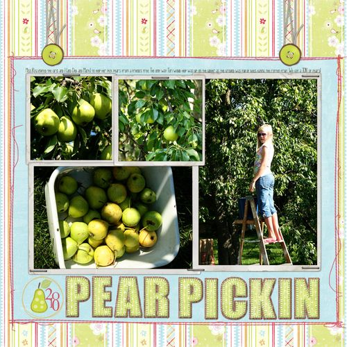 Pear pickin